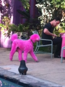 Pink Poodle @ Poolside Party